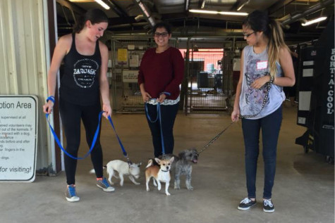 New animal rescue club volunteering at local shelter
